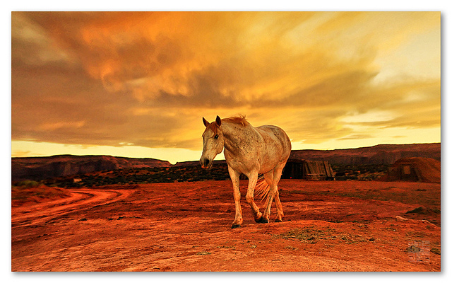 horse travelling alone