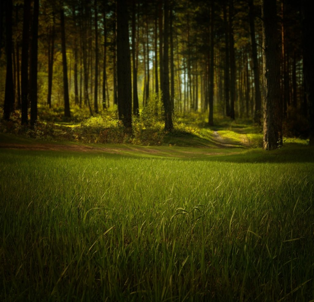 Relaxing grass and forestry